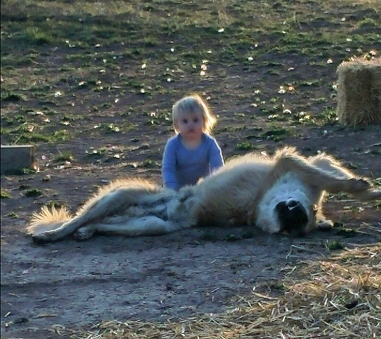 "Our grandson Teeg with our Anatolian ""pup,"" Gabe"